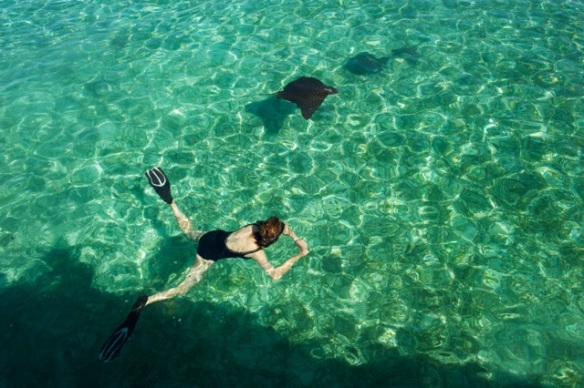 Kate Donnelly snorkelling with Spotted Eagle Ray, Silk Cayes, Belize